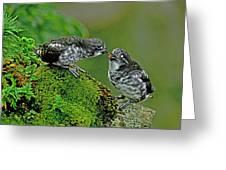 Usa, Alaska, Pribilof Islands, St Greeting Card
