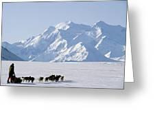 Usa, Alaska, Sled Dogs, Park Ranger Greeting Card
