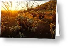 Usa, Arizona, Sonoran Desert, Ocotillo Greeting Card