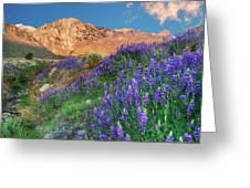 Usa, California, Independence Greeting Card