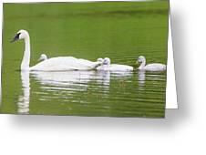 Usa, Montana, Elk Lake, A Trumpeter Greeting Card