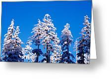 Usa, Oregon, Pine Trees, Winter Greeting Card