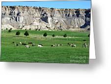 Utah Farm Cows Greeting Card