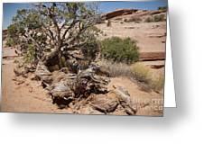 Utah Tree Greeting Card