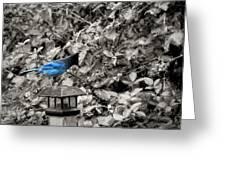 Vagabon Blue Bird Greeting Card