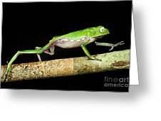 Vaillantis Monkey Frog Greeting Card