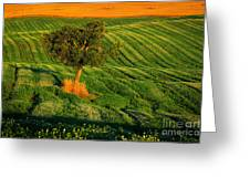 Val D'orcia Tree Greeting Card