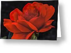 Valentine Rose Greeting Card by Robert Bales