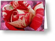 Valentine's Day Rose Greeting Card