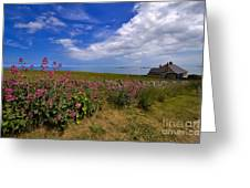 Valerian By A Stone Wall On The Northumberland Coast Greeting Card
