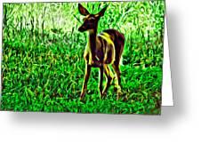 Valley Forge Deer Greeting Card