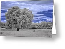 Valley Oak #2 Greeting Card