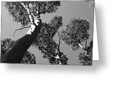 Valley Of The Giant Tingles Bw Greeting Card