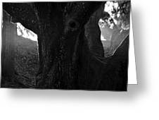 Valley Of The Oak Greeting Card