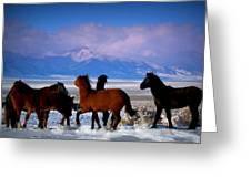 Valley Of The Wild Horses  Greeting Card by Jeanne  Bencich-Nations