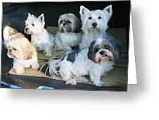 Van Doggies Greeting Card