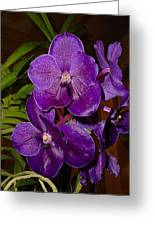 Vanda Dark Purple Greeting Card