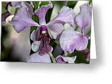 Vanda Emma Van Derventer 6906 Greeting Card