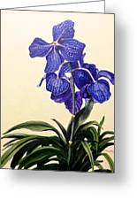Vanda Sausai Blue Orchid Greeting Card