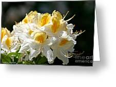 Vanilla Butterscotch Greeting Card