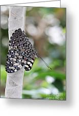 Variable Cracker Butterfly Greeting Card