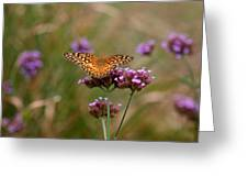 Variegated Fritillary Butterfly In Field Greeting Card