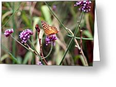 Variegated Fritillary Butterfly Greeting Card
