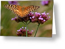 Variegated Fritillary Butterfly Square Greeting Card