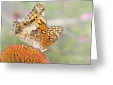 Variegated Fritillary On Cone Flower Greeting Card