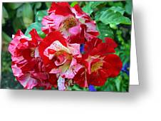 Variegated Multicolored English Roses Greeting Card