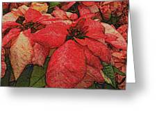 Variegated Poinsettia Greeting Card