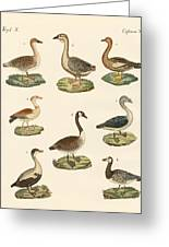 Various Kinds Of Geese Greeting Card