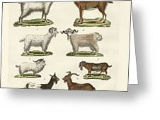 Various Kinds Of Goats And Bucks Greeting Card