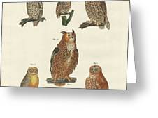 Various Kinds Of Owls Greeting Card