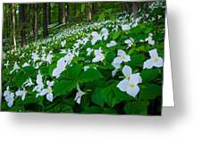 Vast Trillium Greeting Card