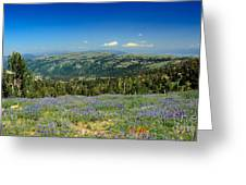 Vast View And Lupine Greeting Card