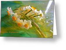 Veil On  Narcissus Greeting Card