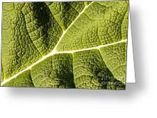 Veins Of A Leaf Greeting Card