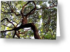 Veins Of Life Greeting Card