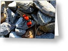Velvet Ant Greeting Card