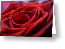 Velvet In Red Greeting Card