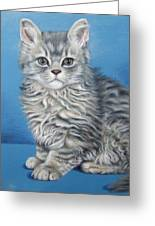 Velvet Kitten Greeting Card