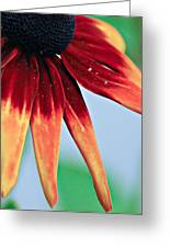 Velvet Petals Greeting Card