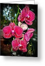 Velvet Petals Greeting Card by Liudmila Di