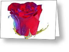 Velvet Rose Bud 2 Greeting Card