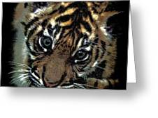 Velvet Tiger Cub Greeting Card