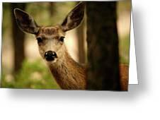 Venado Bura- Small Deer-bryce Canyon Greeting Card