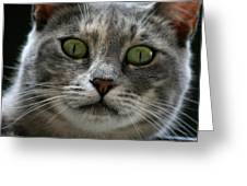 Venetian Cat Greeting Card