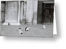 Cats Of Venice Greeting Card