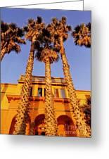 Venice Plams At Sunset Greeting Card